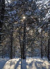 Контрасты (dmilokt) Tags: лес дерево солнце снег тень nikon d700 tree forest пейзаж landscape природа nature dmilokt
