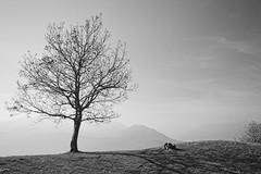 Il sentiero del viandante (giulia_vignati) Tags: sentiero viandante tree bn black white nikon d3200