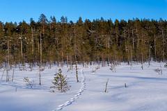 DSCF4172-Mikko-Ilmoniemi.jpg (jkl_metsankavijat) Tags: 35mm jyme jyväskylänmetsänkävijät partio xt1 eräkämppä kylmä lumi lämpö nuotio pakkanen partiohuivi partioscout pimeys scout scouting seikkailijat talvi talvivaellus trangia tuli vaellus vaeltaminen ystävät