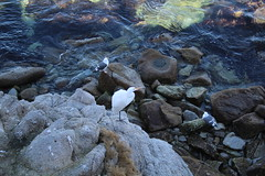 IMG_7661 (mudsharkalex) Tags: california pacificgrove pacificgroveca
