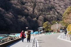 Arashiyama Bramble (thedailyjaw) Tags: d610 nikon japan japanese kyoto sanjusan arashiyama culture walk spiritual texture lines geometry composition ramen travel sushi traditional old city people women cuve curve trees bramble street