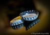 Day 72. (lizzieisdizzy) Tags: table tabletop inside indoors indoor mirrorimage mirror reflections reflection reflective reflect metal top cap tops caps crinklyedge circular lid lids vignette macro