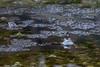 It wasn't me! (Kadu Flyer) Tags: frog pond spawn amphibian eyes ranatemporaria commonfrog