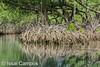 Manglares en Los Haitises, República Dominicana (Issai Campos) Tags: mangrove parquenacionalloshaitises samaná repúblicadominicana loshaitises dominicanrepublic swamp manglar landscape nature travel travelphotography vacations vacaciones paisaje