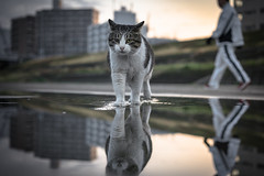 cross (tomomichi_ito) Tags: cat animal reflection sunrise
