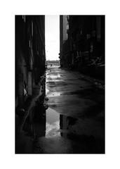 (billbostonmass) Tags: adox film 129silvermax1100min68f fm2n 40mm ultron sl2 epson v800 leather district boston massachusetts