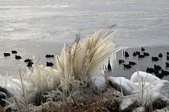 Gooimeerdijk 3.3.18 (3) (rspeur) Tags: almere thenetherlands winter