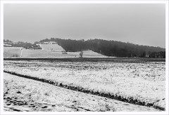 Subito dopo Burian (Outlaw Pete 65) Tags: paesaggi landscapes cielo sky colline hills alberi trees vigneti vineyards campi fields neve snow inverno winter biancoenero blackandwhite nikond600 sigma35mm cellatica lombardia italia