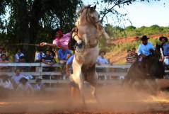 Safons e Mancha da Inhanduí (Eduardo Amorim) Tags: gaúcho gaúchos gaucho gauchos cavalos caballos horses chevaux cavalli pferde caballo horse cheval cavallo pferd pampa campanha fronteira quaraí riograndedosul brésil brasil sudamérica südamerika suramérica américadosul southamerica amériquedusud americameridionale américadelsur americadelsud cavalo 馬 حصان 马 лошадь ঘোড়া 말 סוס ม้า häst hest hevonen άλογο brazil eduardoamorim gineteada jineteada