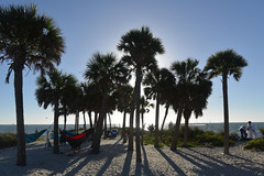 A Day at the Beach (Eddie C3) Tags: tarponspringsflorida florida gulfofmexico howardpark howardbeach palmtrees beach