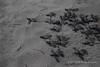 Reserva Playa Tortuga (Roberto Lauro) Tags: costarica viaggi travel natura nature wildlife puravida turtles tartarughe tartaruga turtle riservaplayatortuga mare sea seaside blurb blurbbooks blurbbook photobook fotolibro librofotografico canon