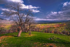 spring become new (samal photography) Tags: landscape photography documentary dramatic panorama nature natural spring