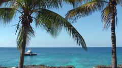 Grand Cayman - Sunset House - SCUBA - Ocean - Palm Tree - Dive Boat - Caribbean Sea - Turquoise Ocean (rmortis10) Tags: grand cayman sunset house scuba ocean palm tree dive boat caribbean sea turquoise