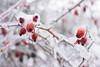 _FN27507.jpg (Francesco_Finocchiaro) Tags: neve landscape appennino orizzontale nebbia burian pianteefiori primavera sanluca freddo bologna macro italia ghiaccio emiliaromagna inverno nevicata francescofinocchiaro esterni