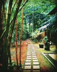 Kuala Lumpur, Federal Territory of Kuala Lumpur https://goo.gl/maps/nvYoj1tcWmu  #travel #holiday #trip #traveling #Park #garden #tree #Asian #Malaysia #KualaLumpur #travelMalaysia #holidayMalaysia #旅行 #度假 #花草树木 #公园 #亚洲 #马来西亚 #吉隆坡 #马来西亚旅行 #马来西亚度假 #taman #