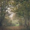 Green Lane (hammermad) Tags: walking home lane green essex trees