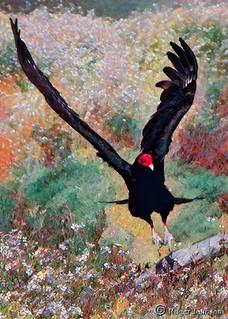 Vulture Settling In