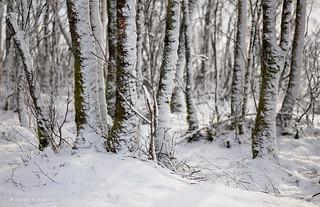 Silver White Winter