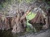 East Bay Regional Park (Ginny Winblad) Tags: eastbayregionalpark turtlepond