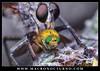 Asilidae (Oskar87jk) Tags: fly robber asilidae mosca cazadora