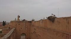 Maroc (wauthier.lise) Tags: maroc