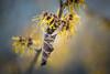 Circle of Life (hploeckl) Tags: vintage bokeh dof spring new life nature mood moody switzerland st gallen botanical garden
