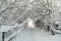 Snow tunnel (farrertracy) Tags: winter snow tree tunnel spring