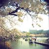 tokyo (thomasw.) Tags: tokyo ueno japan nippon asia asien everydayeverywhere everydayasia travel travelpics wanderlust analog holga cross crossed 120 mf square