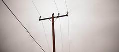 Vast (Austin Barton) Tags: bird wildlife telephone line los angeles mountains clouds rain dark greenery high mist gloomy storm