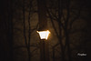 LoneStreetLamp (FischyBizness Photography) Tags: snow snowcovered snowstorm snowfall streets streetlamp footprints moody nature peaceful