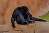 (Theresa Hall (teniche)) Tags: 100400mmlens 2018 600mllens australia canberra canon canon6d canon6dmk2 canoncollective march2018 nationalzooandaquarium teniche theresahall animals canon6dmarkii creatures cute enclosed enclosure preciouscreatures zoo