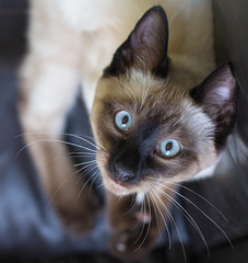 Lounging Kitty. (PebblePicJay) Tags: cat kitten lounge eyes whiskers canon6d