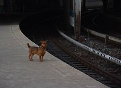 Waiting for the tube - Hamburg (VreSko) Tags: hamburg hh deutschland germany dog dogs hunde hund perro ubahn tube underground metro subway