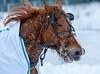 IMG_1433 (Juha Hartikainen) Tags: lempäälä hevonen ravit pirkanmaa finland fi