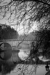 Roma - 2017 (Enzo D.) Tags: fiumetevere pontesisto rivertiber branches bridge foschia italia italy misty olympus rami roma rome tree wwwenzodemartinocom lazio it