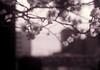 投影 (projection) (Dinasty_Oomae) Tags: arco35 アルコ35 arco アルコ 白黒写真 白黒 monochrome blackandwhite blackwhite bw outdoor 東京都 東京 tokyo 江東区 kotoku 亀戸 kameido 神社 shrine 梅 plum 亀戸天満宮