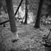 Beaver Tree #1 (LowerDarnley) Tags: holga saugusriver saugus ma winter woods beavers tree gnawed chewed beaver dam