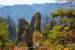 Zhangjiajie National Forest Park (fesign) Tags: avatarmountains beautyinnature chinaeastasia cloudy colourimage day fall famousplace geography green horizontal hunanprovince internationallandmark nationalpark nature nopeople outdoors photography quartzite remote rock rockformation sandstone scenics standingstone tranquilscene tranquility travel traveldestinations tree unescoworldheritagesite yuanjiajiescenicarea zhangjiajie zhangjiajienationalforestpark
