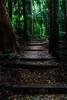 A Walk in the Park (Beth Wode Photography) Tags: rainforest walk greentrees rainforestwalk mtwarning goldcoast fallenleaves trees beth wode bethwode