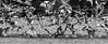 """The Birds......"" (PRA Images) Tags: birds gulls pilsworth blackandwhite monochrome"