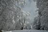 Lac de Bethmale (Michel Seguret Thanks for 11,4 M views !!!) Tags: france pyrenees ariege montagne montana montagna berg moutain hiver invierno inverno winter michelseguret d800 pro arbre tree arbol baum schnee snow neige nieve saison season