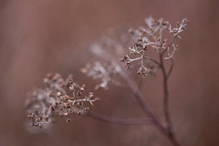 Żródliska_2018-21 (Bedoreq) Tags: 100mm drzwi eco fabryki flowers macro nature plants ziemiaobiecana żródliska