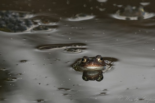 Frogs-8917
