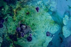 Better Photography Through Chemistry - 34 (Katherine Ridgley) Tags: toronto abstract liquidart liquidsculpture liquid chemical chemistry macro detail circle round planet space trippy surreal blue yellow green swirl