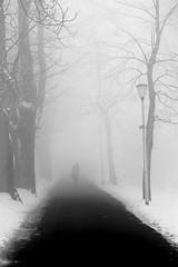 In Transit (K M V) Tags: ellesenva sheswalkingaway alley alleywithtrees road trees snow winter hänloittonee loitontuminen tie talvi kuja puukuja puita talvisumu schnee nebel bäume allee weg vinter träd snö väg composition leadinglines transit transitory muutos changement veränderung förändring