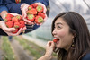 Young woman biting strawberry in strawberry farm (Apricot Cafe) Tags: img83772 asia asianandindianethnicities healthylifestyle japan japaneseethnicity tamronsp35mmf18divcusdmodelf012 agriculture biting candid carefree casualclothing charming cheerful chibaprefecture colorimage copyspace eating enjoyment farm food freshness fruit fun happiness harvesting humanface juicy leisureactivity lifestyles oneperson onlyjapanese outdoors people photography picking plant realpeople selectivefocus sideview smiling springtime strawberry sustainablelifestyle tourism tourist traveldestinations waistup weekendactivities women youngadult yummy inzaishi chibaken jp