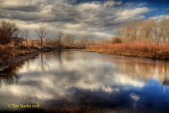 South Platte River (MERLIN08) Tags: usa colorado jeffersonco plattriver waterway forest outdoors