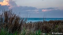 Mediterranean sea (Vitorlandophotographs) Tags: torreamare apulia puglia sea mediterraneansea plants cloud sky sunny landscape nature wildnature lovenature wild