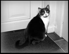 Waiting to go out (zweiblumen) Tags: gaia cat pet monochrome canoneos50d canonef35mmf2 polariser canonspeedlite430exii lastoliteezyboxspeedlite2 zweiblumen