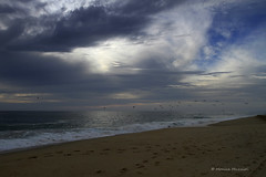 (Monica Muzzioli) Tags: ocean beach clouds weather blue tracks waves light birds pelicans pelican fly flock nature water pacific